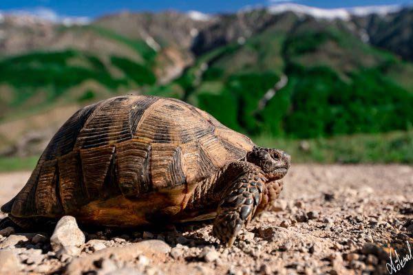 köksal şahin,köksal,şahin,koksal,koksal sahin,doğa,doga,dağ,ırmak,fotoğraf,fotoğrafçı,fotoğraf sanatçısı,hayvan,hayvanlar,animal,animals,kaplumbağa