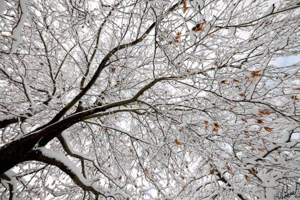 köksal şahin,köksal,şahin,koksal,koksal sahin,doğa,doga,dağ,ırmak,fotoğraf,fotoğrafçı,fotoğraf sanatçısı,ağaç,ağaç,çiçek,cicek,bitki