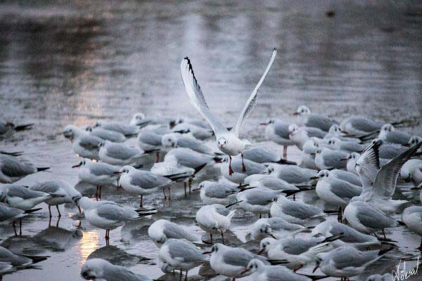 köksal şahin,köksal,şahin,koksal,koksal sahin,doğa,doga,dağ,ırmak,fotoğraf,fotoğrafçı,fotoğraf sanatçısı,hayvan,hayvanlar,animal,animals,kuş,bird,birds