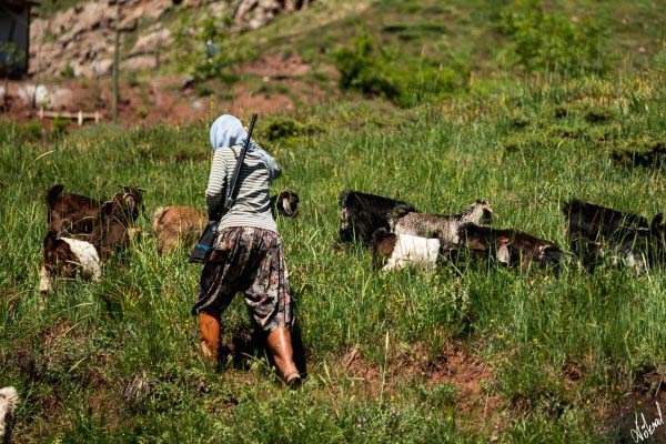 köksal şahin,köksal,şahin,koksal,koksal sahin,fotoğraf,fotoğrafçı,fotoğraf sanatçısı,dağ,insan,person,portre,portrait,Dersim,kadın,kadın çoban,ovacık,keçi,koyun,şavak,şavak kadını,silahlı kadın çoban